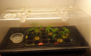Humidity dome with water dish