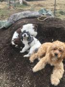 Pups lovin the mix !